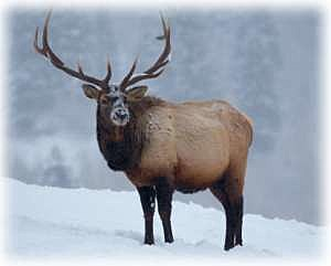 Surplus of out of state hunting licenses for Montana out of state fishing license