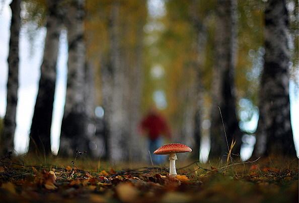 Autumn in Ivanovo Region, Russia